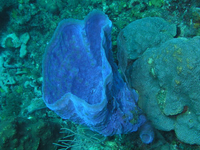 Photo at La Guasa:  Vase Sponge