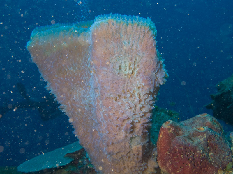 Photo at Coronita:  Vase Sponge