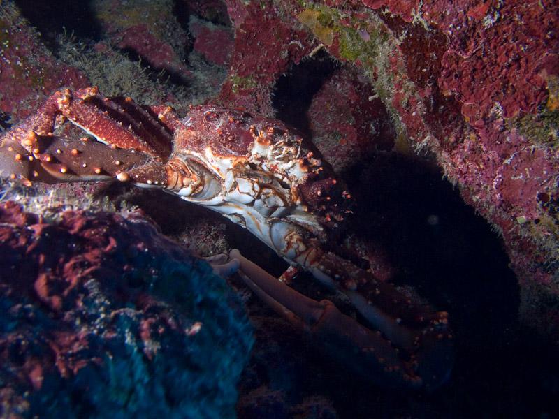 Photo at Coronita:  Crab