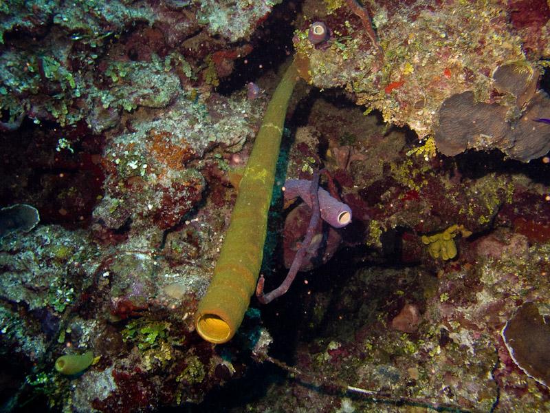 Photo at Punta Gavilanes:  Tube Sponge