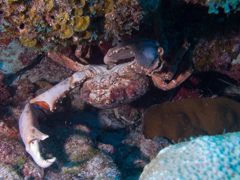 Photo at Off-Limits:  Crab