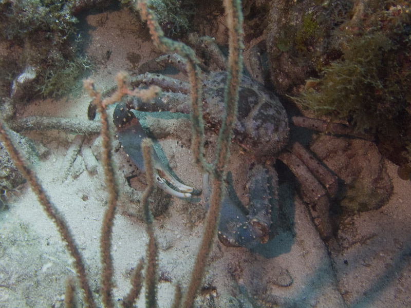 Photo at Golden Valley (55):  Crab
