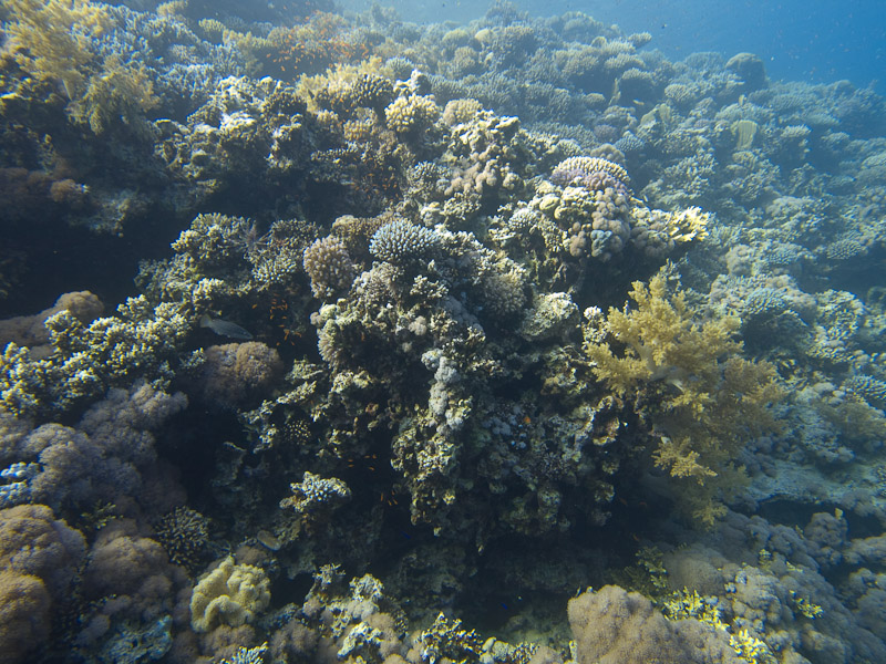 Photo at Blue Hole Coral Garden: