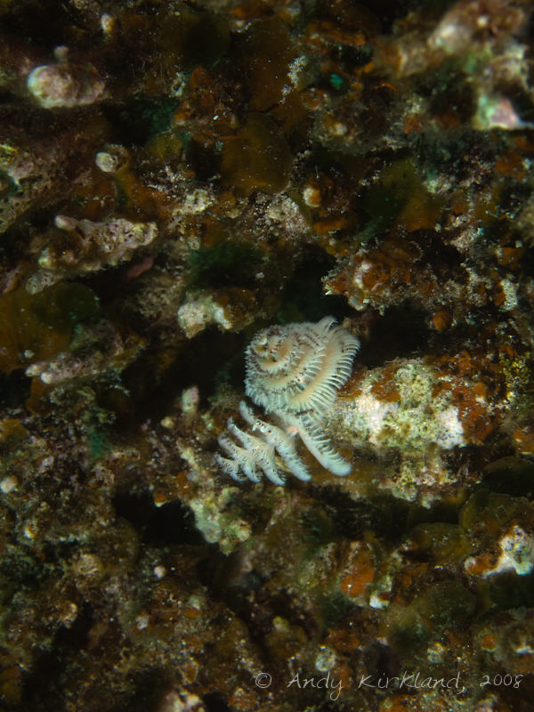 Photo at Moray Garden - North:  Christmas Tree worm
