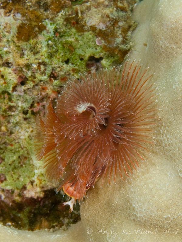 Photo at Moray Garden - North:  Christmas Tree worm