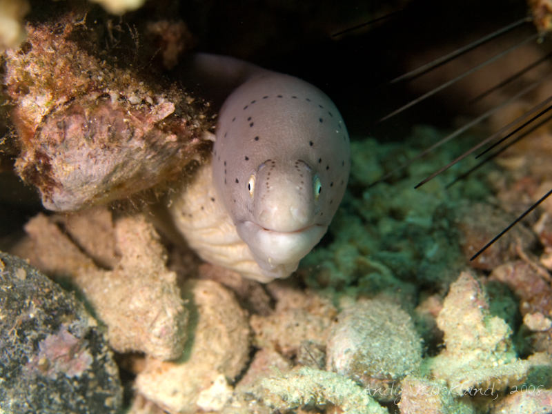 Photo at Gabr-el-Bint:  Geometric moray