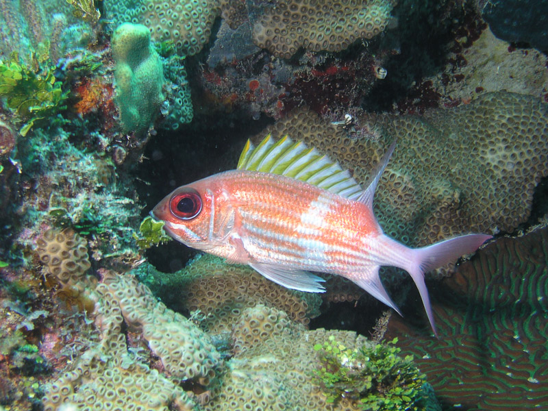 Photo at La Patanita:  Squirrelfish