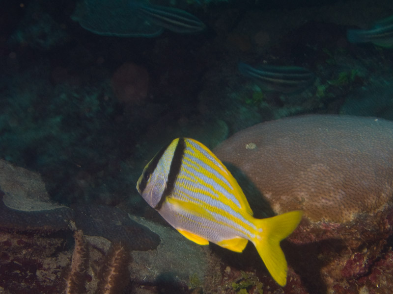 Photo at El Laberinto:  Porkfish