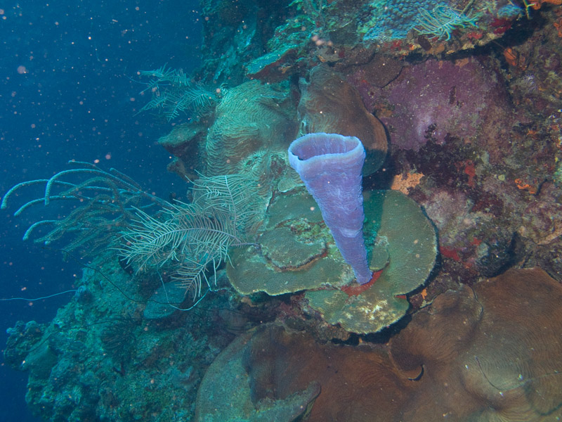 Photo at Coronita:  Vase Sponge