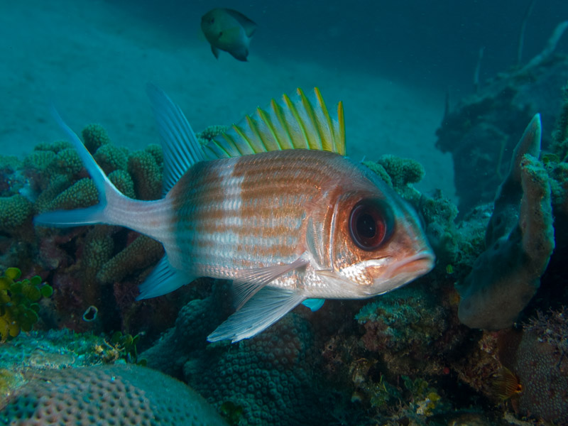 Photo at Faro de Luna:  Squirrelfish