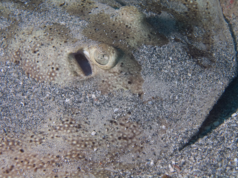 Photo at Faro de Luna:  Stingray