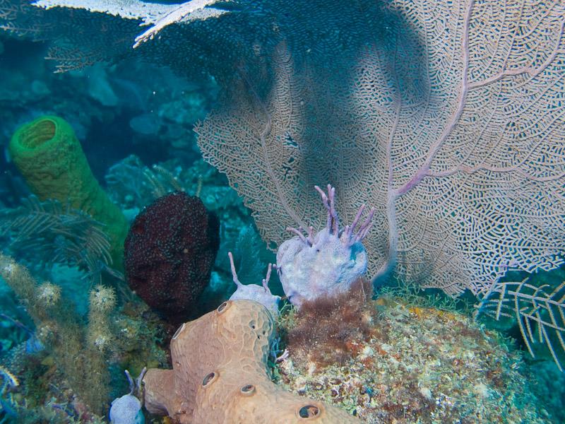 Photo at Punta Gavilanes:
