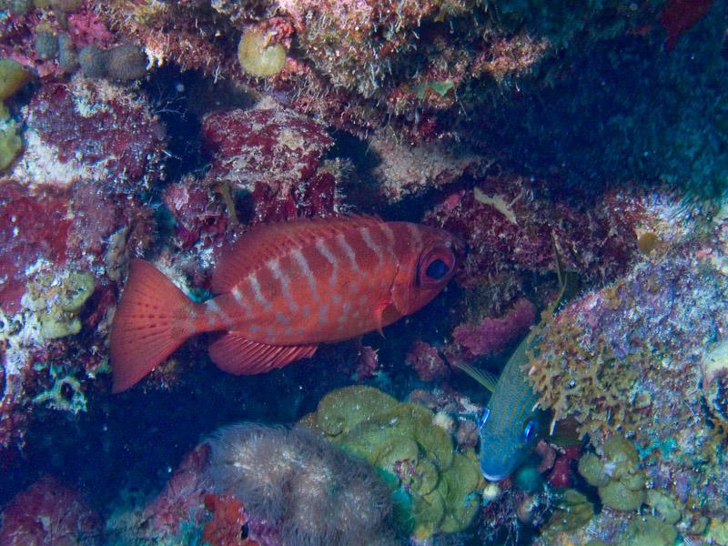 Photo at Punta Gavilanes:  Glasseye