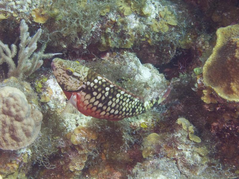 Photo at Magic Kingdom (12):  Stoplight Parrotfish