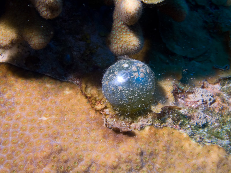 Photo at Golden Valley (55):  Sailor's eyeball