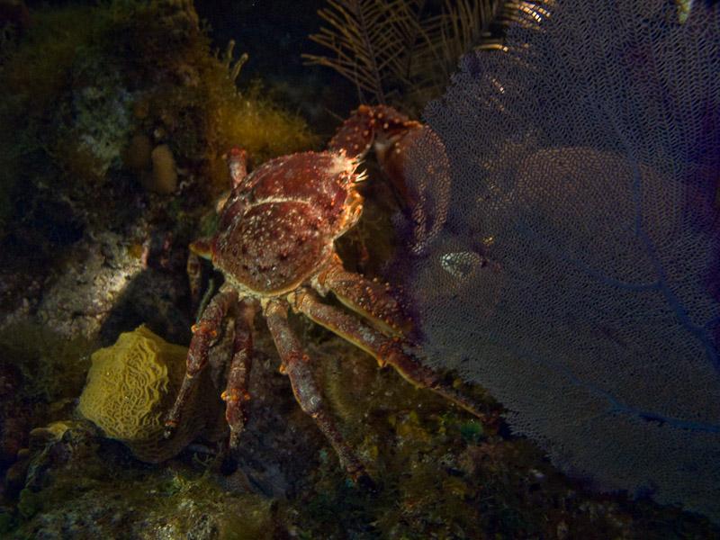 Photo at Low Wall (56):  Crab