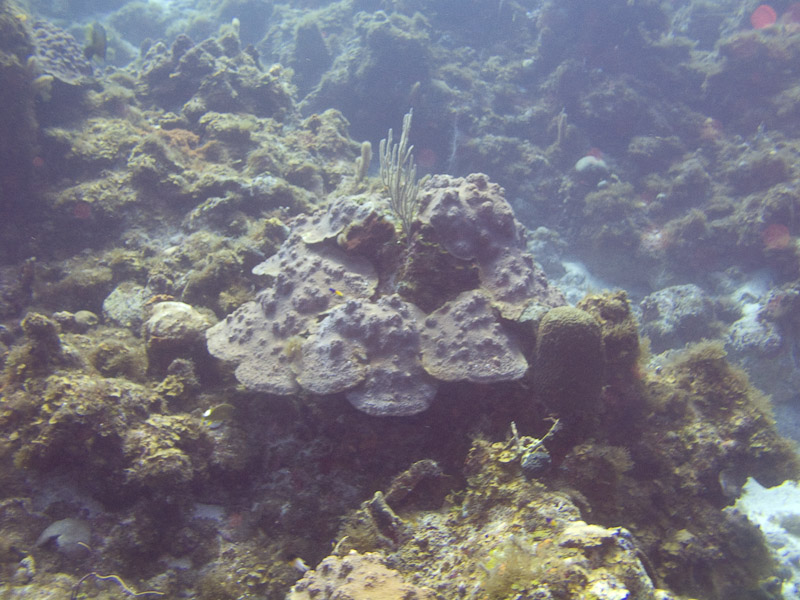 Photo at Black Coral Wall (1):