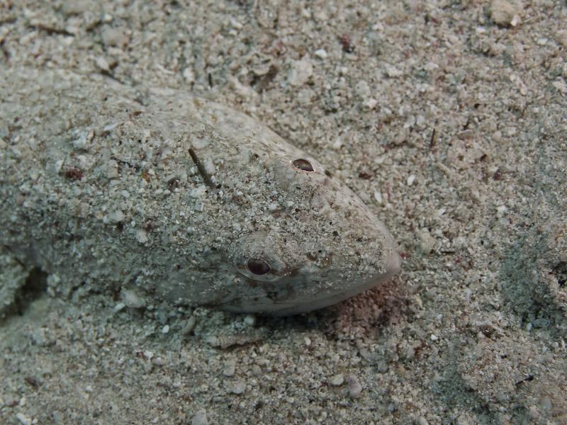 Photo at Canyon:  Lizardfish
