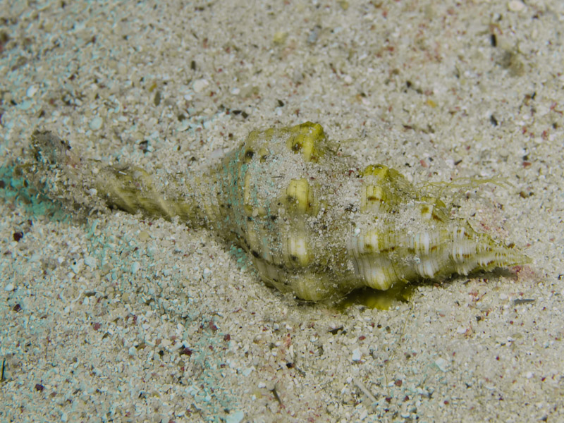 Photo at Eel Garden:  Trapeze horse conch