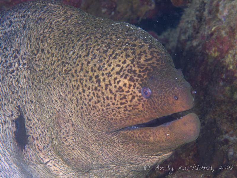 Photo at Moray Garden - North:  Giant moray
