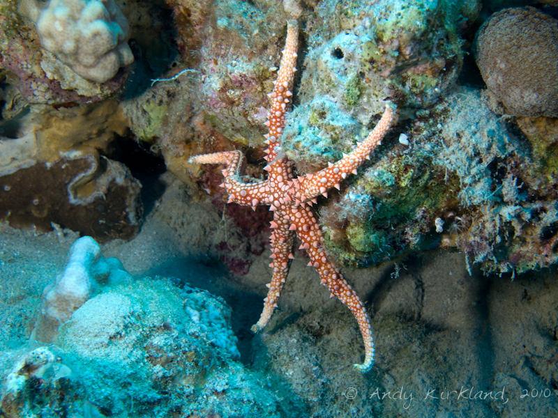 Photo at Moray Garden - North:  Egyptian sea star