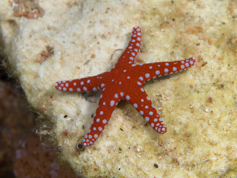 Photo at The Caves:  Ghardaqa Sea Star