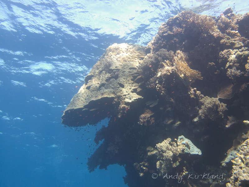 Photo at Sha'ab Claudio:  Mountain coral
