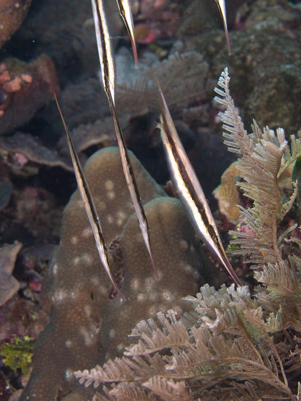 Photo at Pangalisan:  Razorfish