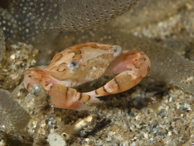Photo at Tasik Ria House Reef:
