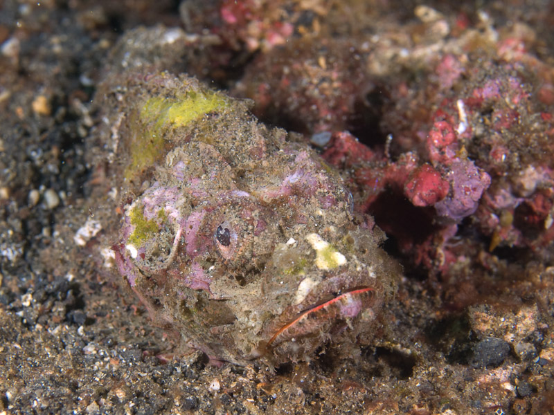 Photo at Aw Shucks:  False stonefish