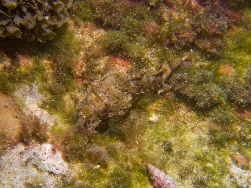 Photo at Popeye Village:  Small rockfish