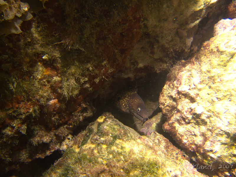 Photo at Popeye Village:  Moray eel