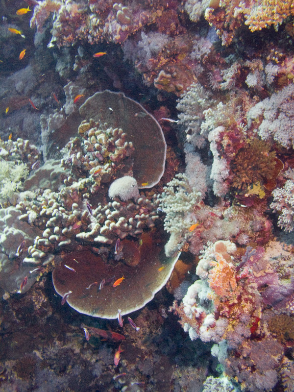 Photo at Elphinstone Reef - East Side: