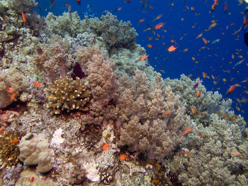 Photo at Elphinstone Reef - East Side: