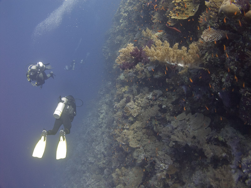 Photo at Elphinstone Reef - West Side: