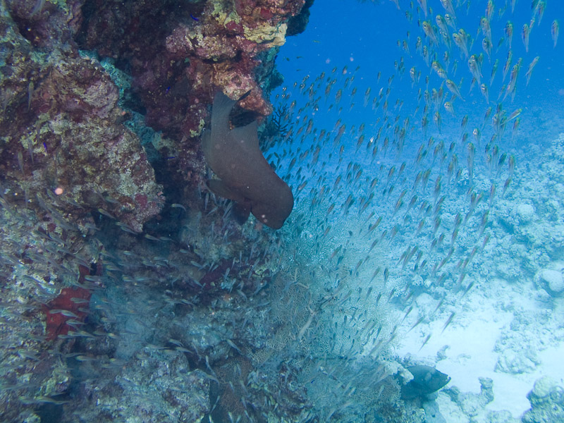 Photo at Ras Caty:  Redmouth grouper