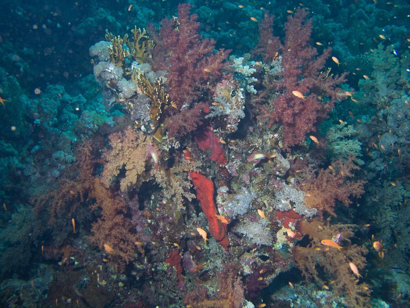 Photo at Thomas Reef - North side: