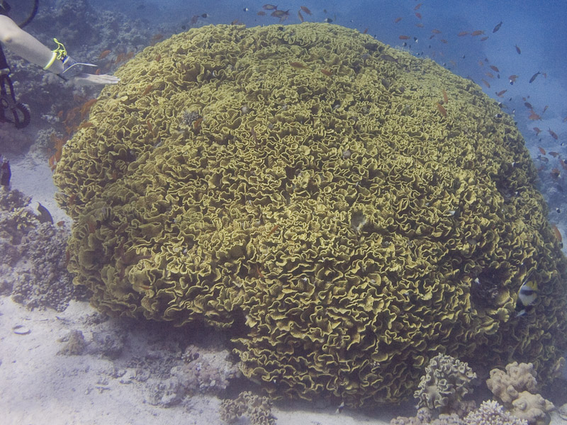 Photo at Near Garden:  Salad Coral