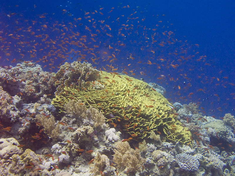 Photo at Jackson Reef: