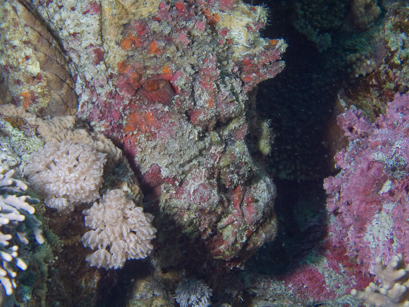Photo at Jackson Reef:  Stonefish