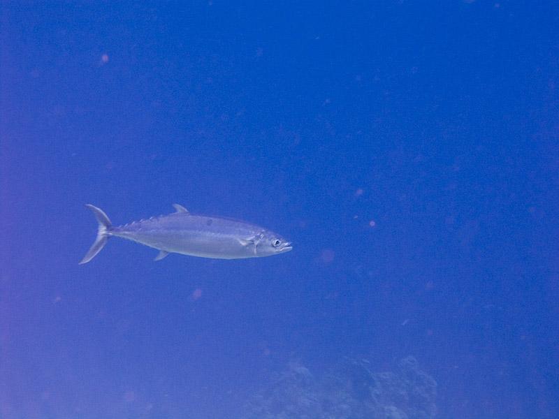 Photo at Jackfish Alley:  Tuna