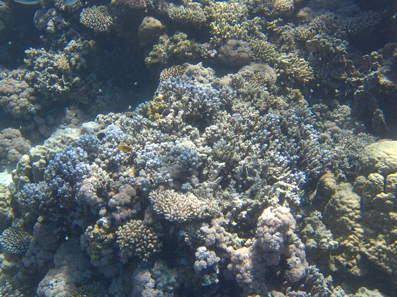 Photo at Jackson Reef: