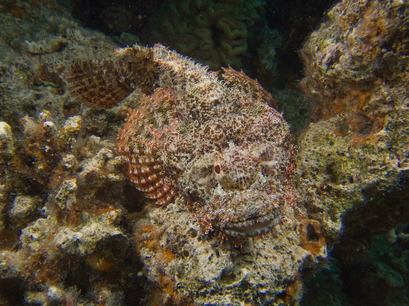 Photo at The Canyon:  Tassled scorpionfish
