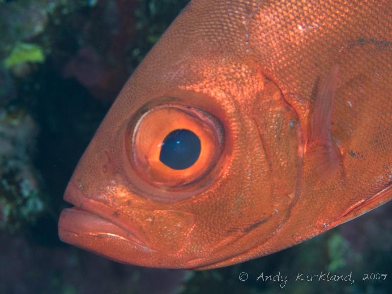 Photo at Jackson Reef- North side:  Moontail bullseye