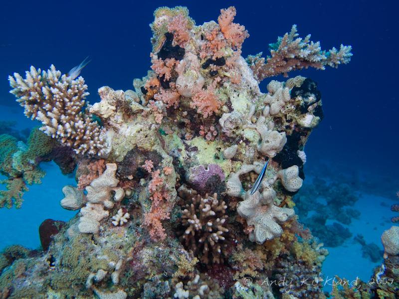 Photo at Gordon Reef: