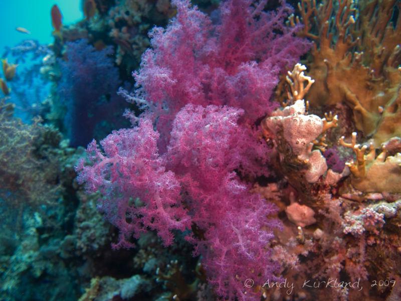 Photo at Shark & Yolanda Reefs: