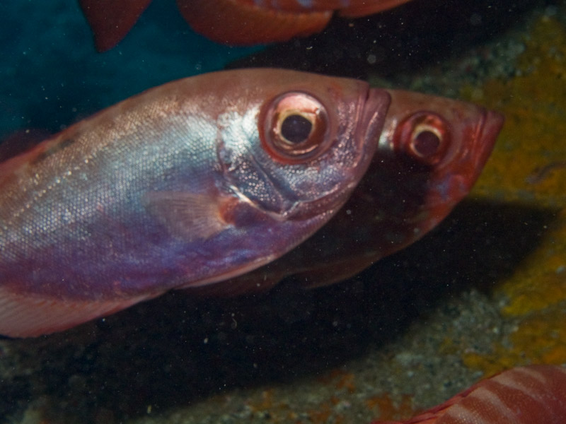 Photo at Neptune's Cave:  Glasseye